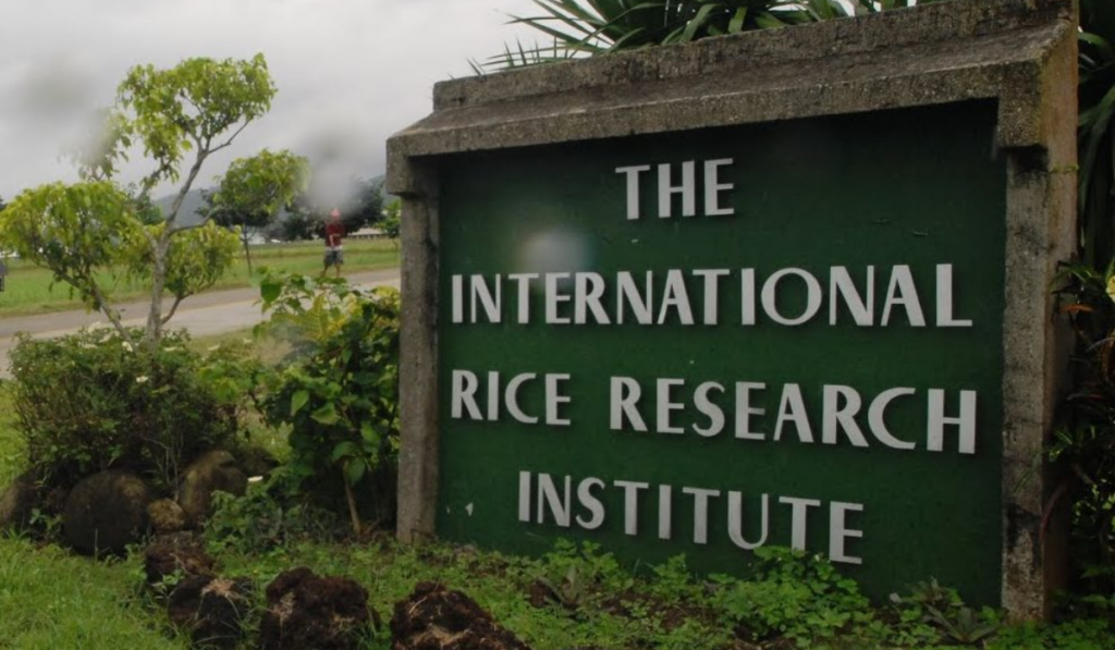 Research Position in IRRI, Philippines